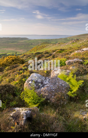 Gorse, bracken and boulders on Rhossili Down near Llangennith, Gower Peninsula, overlook Rhossili Bay at sunset. - Stock Photo