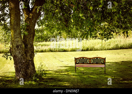 Bench under lush shady tree in summer park - Stock Photo