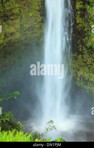USA, Hawaii, The Big Island, Akaka Falls State Park - Stock Photo