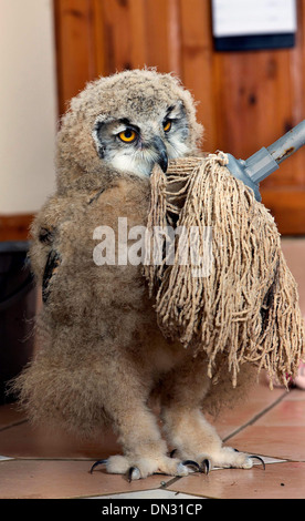Siberian Eagle Owl - Stock Photo