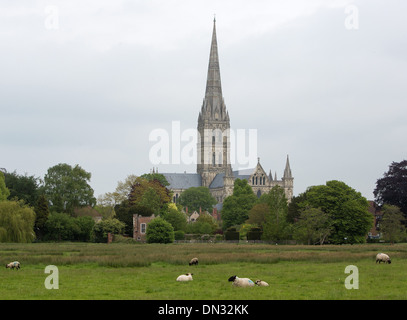 GV of Salisbury Cathedral, Wiltshire. 29 May 2013 - Stock Photo