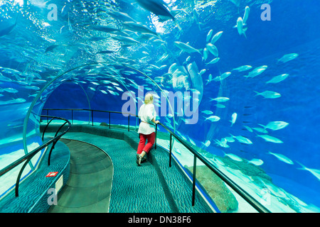 Female tourist at Shanghai ocean Aquarium, Peoples Republic of China, PRC, Asia - Stock Photo