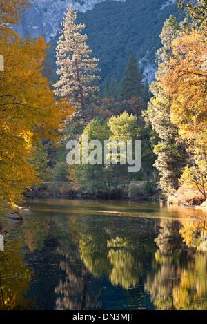 Autumn foliage reflected in the Merced River, Yosemite Valley, California, USA. Autumn (October) 2013. - Stock Photo
