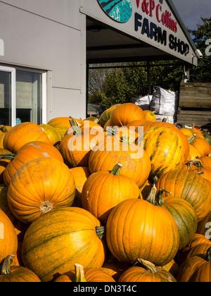 Pumpkins for sale at an English Farm Shop - Stock Photo