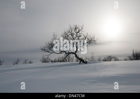 Image of a lonely birch tree in a snowy landscape - Stock Photo