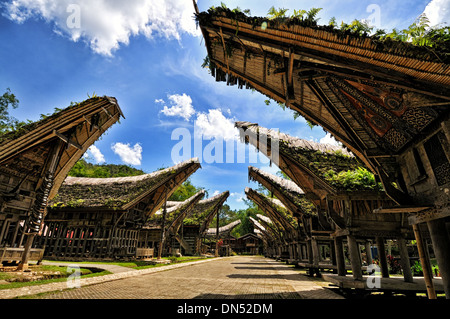 Tongkonan in a Torajan village, South Sulawesi - Stock Photo