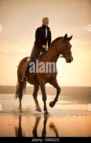 Woman riding on a Hanoverian gelding, wearing an English bridle, at a gallop, in the evening light, on the beach - Stock Photo