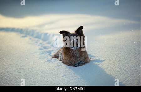 Dog in the snow - Stock Photo