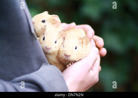 Little girl holding guinea pig in her arms - Stock Photo