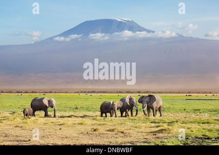 Elephants with Mount Kilimanjaro as a back-drop in the Amboseli National Park, Kenya - Stock Photo