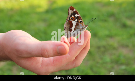 butterfly on finger - Stock Photo