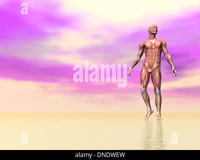 Front view of male musculature, pink background. - Stock Photo