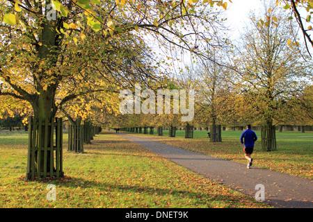 Jogger on lime tree avenue Bushy Park autumn in London England UK - Stock Photo
