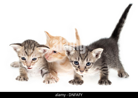 Cute kittens together on white background - Stock Photo