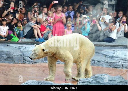Singapore. 26th Dec, 2013. Visitors watch polar bear Inuka at the Singapore Zoo on Dec. 26, 2013. The Singapore - Stock Photo