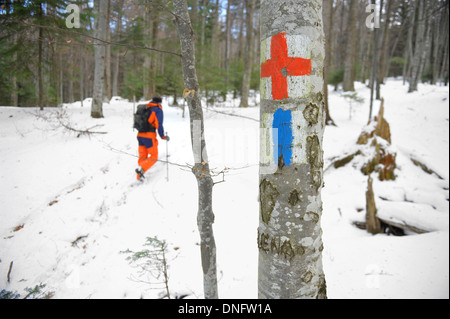 Tourist routes markings with red cross and blue strip on a tree - Stock Photo