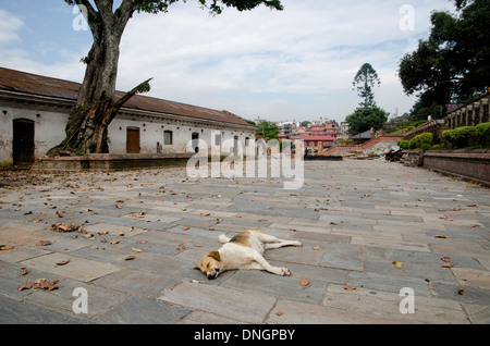 A sleeping stray dog in Pashupathinah Temple, Kathmandu, Nepal - Stock Photo