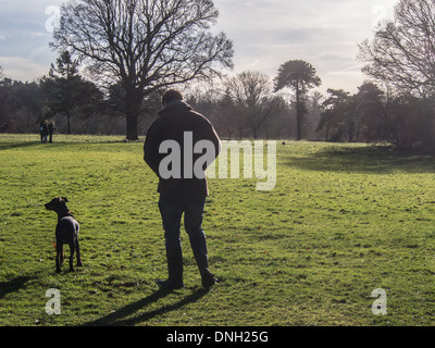 A man walks his Doberman puppy in Nonsuch Park in Cheam, Surrey. - Stock Photo