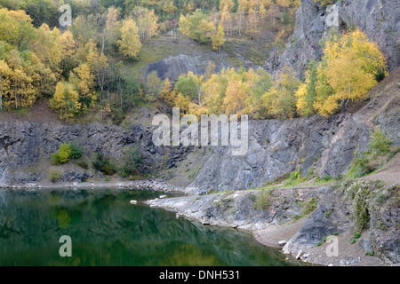 Silver Birch, Betula pendula, in Autumn colour line the cliff edge of Gullet Quarry, Malvern Hills, Worcestershire. - Stock Photo
