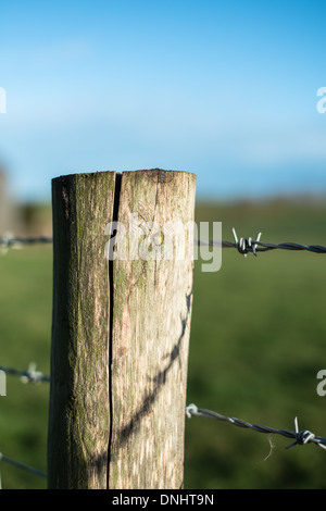 Wooden Fence Post with Barbed Wire. - Stock Photo
