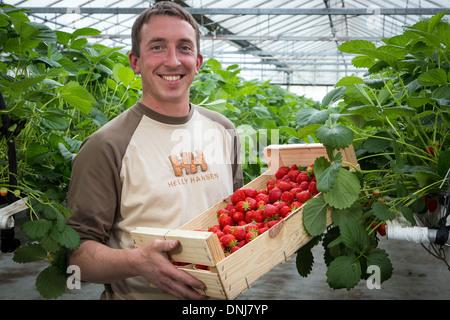 mara des bois strawberry stock photo royalty free image 92965803 alamy. Black Bedroom Furniture Sets. Home Design Ideas
