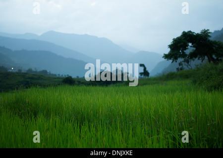 Rice field near Thimphu, Bhutan - Stock Photo