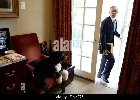 Bo the family dog watches US President Barack Obama enter the Outer Oval Office in the White House November 6, 2013 - Stock Photo