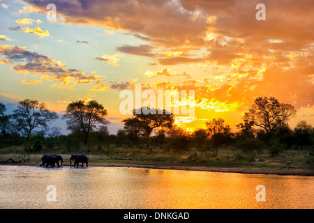 Iconic African sunset at Jones Dam with a herd of elephants  in Kruger National Park in South Africa - Stock Photo