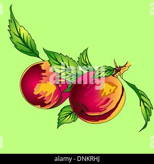 Two peaches with leaves on a branch on a light background