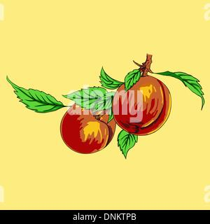 Two peaches with leaves on a branch on a light background - Stock Photo