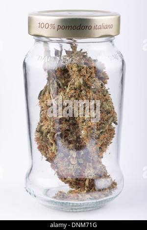 Large cannabis sativa buds in a glass jar shot on a seamless white background. - Stock Photo