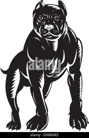 illustration of a pitbull dog done in retro woodcut style. - Stock Photo