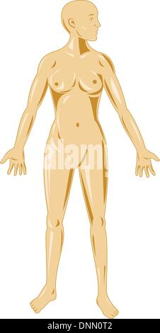 illustration on the female human anatomy showing a male standing on isolated background - Stock Photo