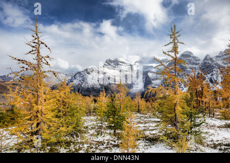 Golden Larches in the Canadian Rockies - Stock Photo