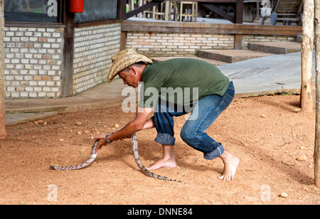 Guide picks up Red-tailed Boa (Boa constrictor), Jardim da Amazonia Lodge, Mato Grosso, Brazil - Stock Photo