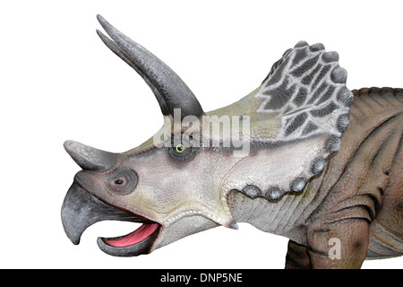 Triceratops Head Model Side View - Stock Photo