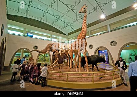 Mixed race school children inside Great Hall of Mammals Nairobi National Museum with diorama of Elephant Giraffe - Stock Photo