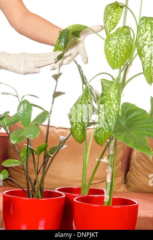 plant care in home on white background - Stock Photo