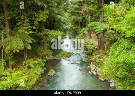 Whangarei Hatea River, the river just below Whangerai Falls. - Stock Photo