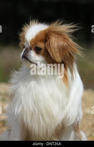 Dog breeding instructions