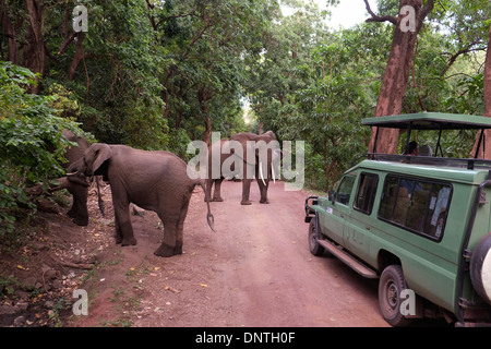 Tourists in open topped Safari Jeep watch herd of elephants move through Lake Manyara National Park located in Arusha - Stock Photo