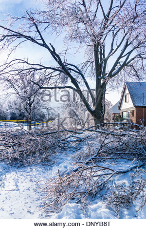 After a freezing rain tree branches made too heavy by coating of ice break off in Toronto Ontario Canada - Stock Photo