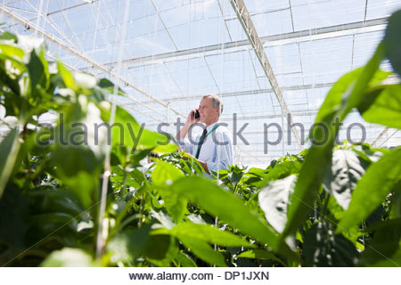 Businessman talking on cell phone in greenhouse - Stock Photo