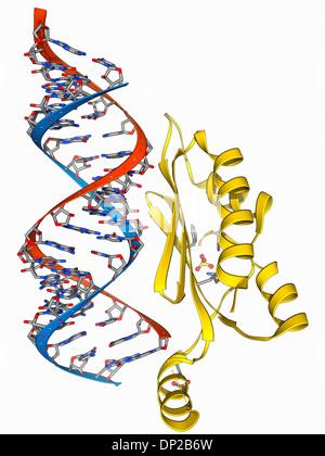 RNA interference viral suppressor and RNA - Stock Photo