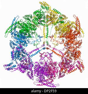 Fatty acid synthase molecule - Stock Photo