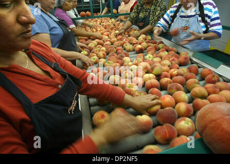 Jun 08, 2006; Visalia, CA, USA; Laborers grade and sort peaches at a fruit packing plant owned by Jackson Family - Stock Photo