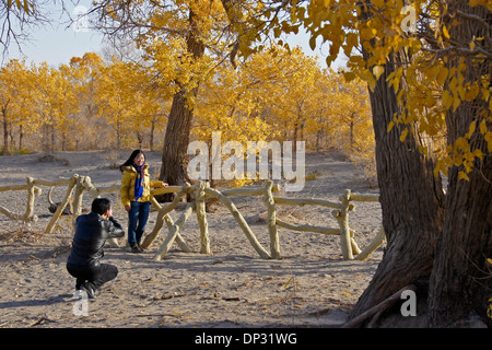 Man photographing woman under poplar trees in autumn, Ejina Qi, Inner Mongolia, China - Stock Photo