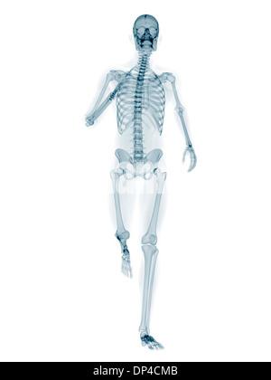Skeleton running, artwork - Stock Photo