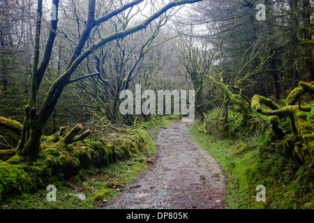 path winding through ancient moss covered woods - Stock Photo