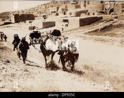 German soldiers transport wounded soldiers on a camel at the front in Palestine in 1918. The Sinai and Palestine - Stock Photo